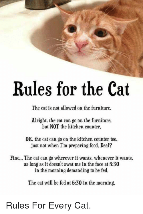 Food, Furniture, and Alright: Rules for the Cat  The cat is not allowed on the furniture.  Alright, the cat can go on the furniture.  but NOT the kitchen counter.  OK, the cat can go on the kitchen counter too.  just not when I'm preparing food. Deal?  Fine... The cat can go wherever it wants. whenever it wants.  as long as it doesn't swat me in the face at 5:30  in the morning demanding to be fed.  The cat will be fed at 5:30 in the morning. <p>Rules For Every Cat.</p>