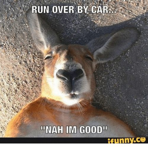 run over by car inah im good ifunny c3 14764851 ✅ 25 best memes about furry deer furry deer memes,Funny Deer Memes