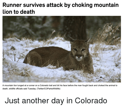 Colorado Runner Kills Mountain Lion: Runner Survives Attack By Choking Mountain Lion To Death A