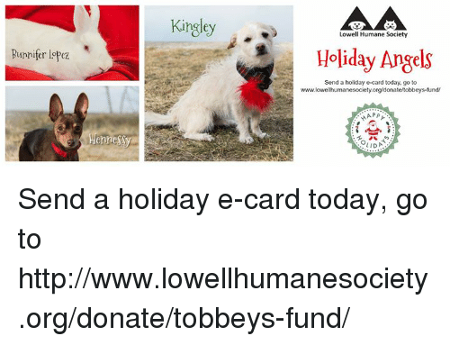 memes angel and angels runnifer lopez henne kingley lowell humane society holiday angels - Humane Society Christmas Cards