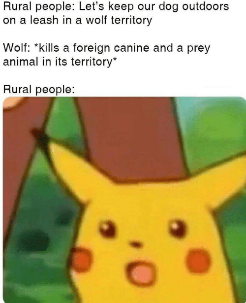 Animal, Wolf, and Dog: Rural people: Let's keep our dog outdoors  on a leash in a wolf territory  Wolf: *kills a foreign canine and a prey  animal in its territory*  Rural people: