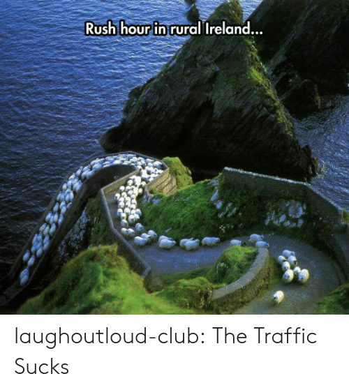 Club, Rush Hour, and Traffic: Rush hour in rural Ireland  .. laughoutloud-club:  The Traffic Sucks