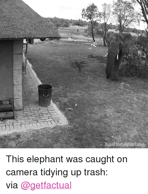 """Target, Trash, and Twitter: Russell Madaighim/Catea <p>This elephant was caught on camera tidying up trash:<br/></p><p>via <a href=""""https://twitter.com/GetFactual/status/929906867115053056"""" target=""""_blank"""">@getfactual</a></p>"""