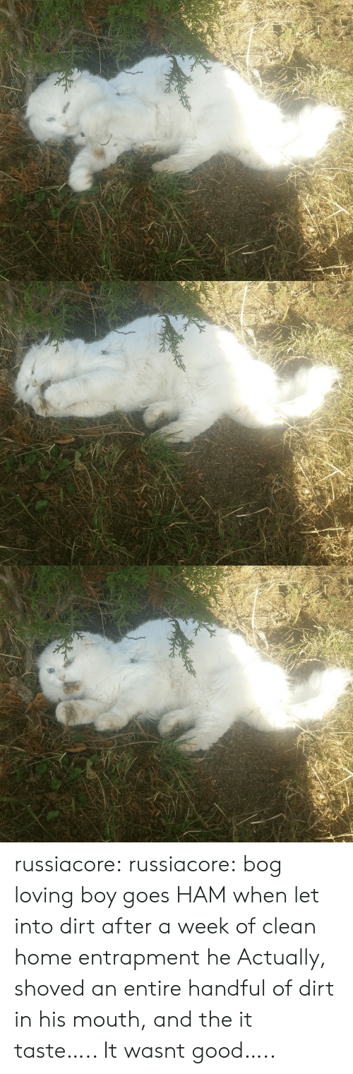 Target, Tumblr, and Blog: russiacore:  russiacore:  bog loving boy goes HAM when let into dirt after a week of clean home entrapment  he Actually, shoved an entire handful of dirt in his mouth, and the it taste….. It wasnt good…..