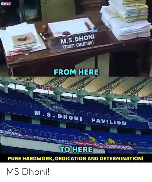 Memes, 🤖, and Dhoni: RVCJ  M.S. DHONI  TICKET COLLECTOR)  FROM HERE  SERV  SERVO  M.S. DHONI PAVILION  TO HERE  PURE HARDWORK, DEDICATION AND DETERMINATION! MS Dhoni!