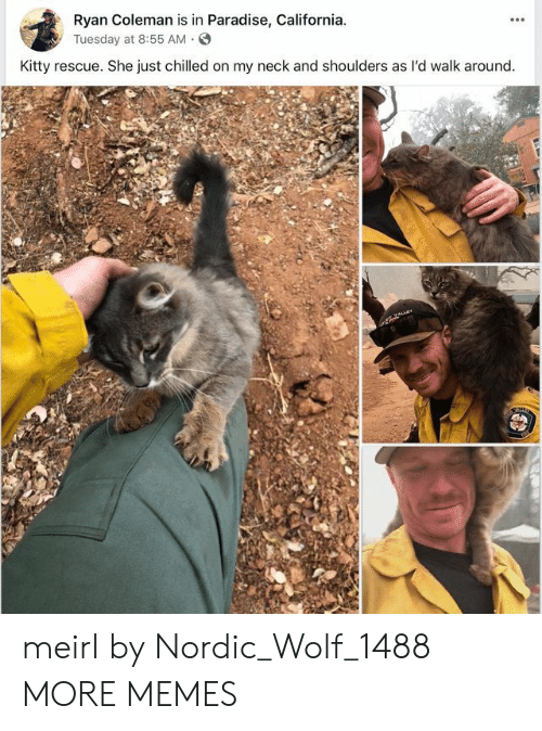 Dank, Memes, and Paradise: Ryan Coleman is in Paradise, California  yTuesday at 8:55 AM.S  Kitty rescue. She just chilled on my neck and shoulders as l'd walk around meirl by Nordic_Wolf_1488 MORE MEMES