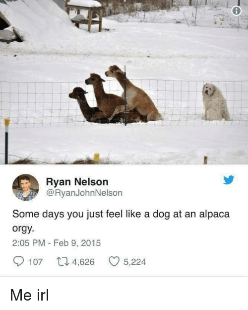 Orgy, Irl, and Me IRL: Ryan Nelson  @RyanJohnNelson  Some days you just feel like a dog at an alpaca  orgy  2:05 PM - Feb 9, 2015  107 4,626 5,224 Me irl