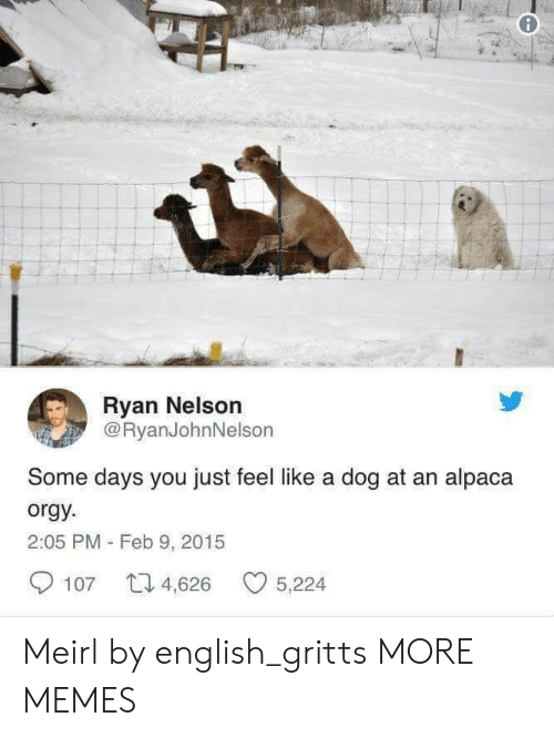 Dank, Memes, and Orgy: Ryan Nelson  @RyanJohnNelson  Some days you just feel like a dog at an alpaca  orgy  2:05 PM - Feb 9, 2015  107 4,626 5,224 Meirl by english_gritts MORE MEMES