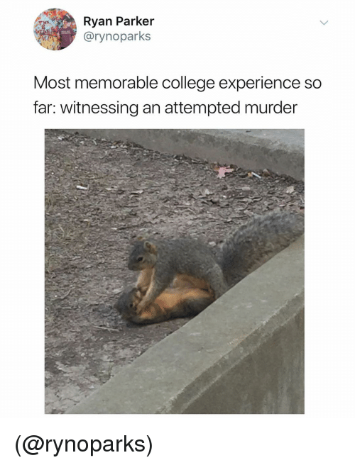 College, Dank Memes, and Experience: Ryan Parker  @rynoparks  Most memorable college experience so  far: witnessing an attempted murder (@rynoparks)