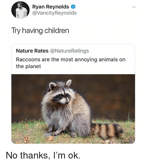 Animals, Children, and Memes: Ryan Reynolds *  @VancityReynolds  Try having children  Nature Rates @NatureRatings  Raccoons are the most annoying animals on  the planet No thanks, I'm ok.