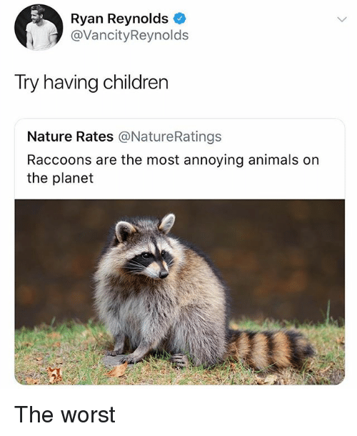 Animals, Children, and The Worst: Ryan Reynolds  @VancityReynolds  Try having children  Nature Rates @NatureRatings  Raccoons are the most annoying animals on  the planet The worst