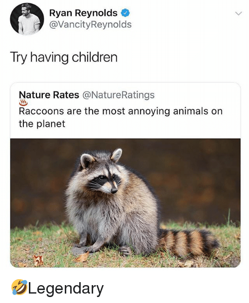 Animals, Children, and Memes: Ryan Reynolds  @VancityReynolds  Try having children  Nature Rates @NatureRatings  Raccoons are the most annoying animals on  the planet 🤣Legendary