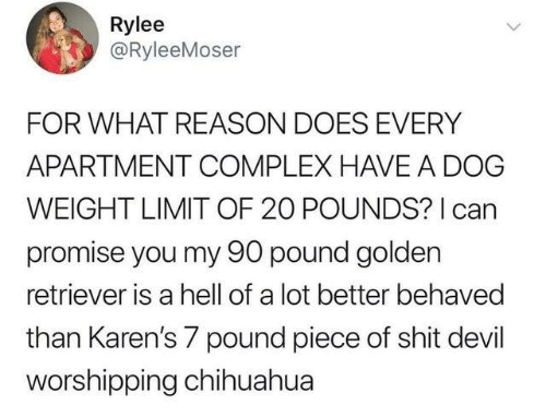 Chihuahua, Complex, and Dank: Rylee  @RyleeMoser  FOR WHAT REASON DOES EVERY  APARTMENT COMPLEX HAVE A DOG  WEIGHT LIMIT OF 20 POUNDS? I can  promise you my 90 pound golden  retriever is a hell of a lot better behaved  than Karen's 7 pound piece of shit devil  worshipping chihuahua