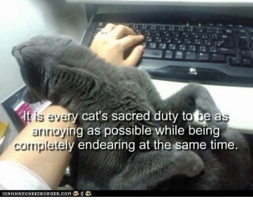 [Image: s-eve-aririgyi-cats-sacred-duty-to-be-a-ng-25946990.png]