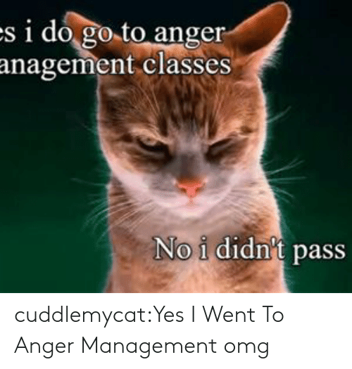 Omg, Tumblr, and Blog: s i do go to anger  anagement classes  No i didn't pass cuddlemycat:Yes I Went To Anger Management omg