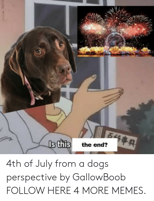 Dank, Memes, and Target: s thist  the end? 4th of July from a dogs perspective by GallowBoob FOLLOW HERE 4 MORE MEMES.