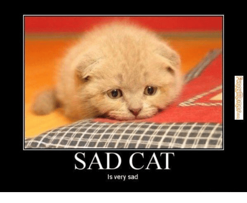 Image result for sad cat meme