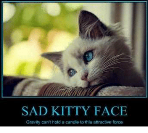 SAD KITTY FACE Gravity Can't Hold a Candle to This ...