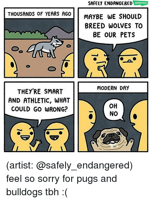 Memes, Sorry, and Tbh: SAFELY ENDANGERED WEBTOM  THOUSANDS OF YEARS AGO  MAYBE WE SHOULD  BREED WOLVES TO  BE OUR PETS  MODERN DAY  THEY'RE SMART  AND ATHLETIC, WHAT  COULD GO WRONG?  OH  NO (artist: @safely_endangered) feel so sorry for pugs and bulldogs tbh :(