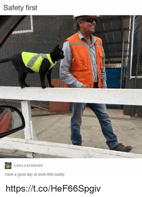 Memes, Work, and Good: Safety first  COOLCATGROUP  Have a good day at work little buddy https://t.co/HeF66Spgiv