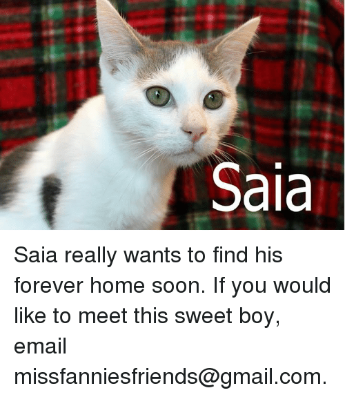 Superb Saia Saia Really Wants To Find His Forever Home Soon If You Download Free Architecture Designs Scobabritishbridgeorg