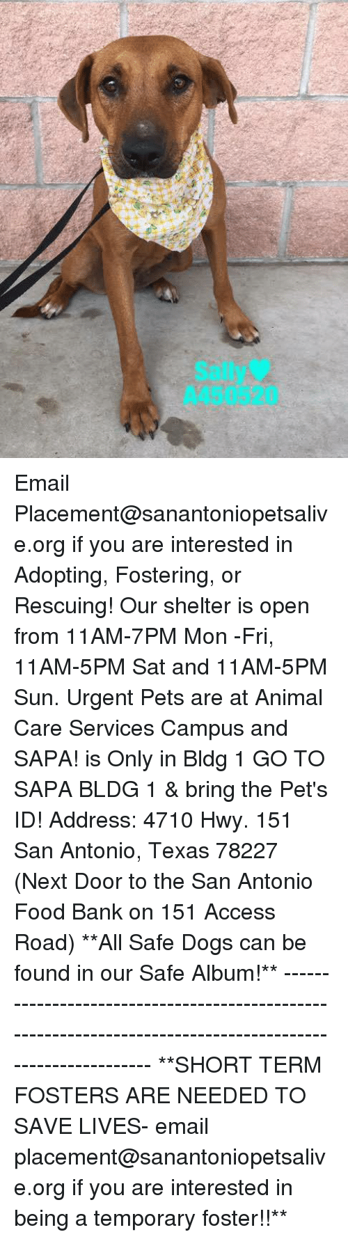 Dogs, Food, and Memes: Sally  A450520 Email Placement@sanantoniopetsalive.org if you are interested in Adopting, Fostering, or Rescuing!  Our shelter is open from 11AM-7PM Mon -Fri, 11AM-5PM Sat and 11AM-5PM Sun.  Urgent Pets are at Animal Care Services Campus and SAPA! is Only in Bldg 1 GO TO SAPA BLDG 1 & bring the Pet's ID! Address: 4710 Hwy. 151 San Antonio, Texas 78227 (Next Door to the San Antonio Food Bank on 151 Access Road)  **All Safe Dogs can be found in our Safe Album!** ---------------------------------------------------------------------------------------------------------- **SHORT TERM FOSTERS ARE NEEDED TO SAVE LIVES- email placement@sanantoniopetsalive.org if you are interested in being a temporary foster!!**