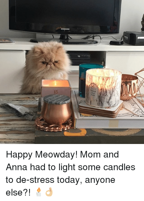 samsung happy meowday mom and anna had to light some candles to de