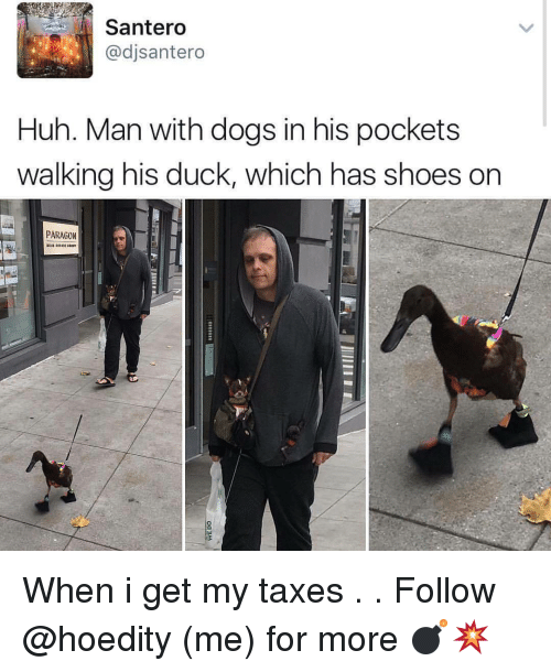Memes, 🤖, and Paragon: Santero  adjsantero  Huh. Man with dogs in his pockets  walking his duck, which has shoes on  PARAGON When i get my taxes . . Follow @hoedity (me) for more 💣💥