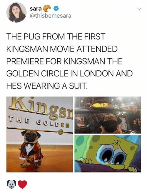 Memes, London, and Movie: sara  @thisbemesara  THE PUG FROM THE FIRST  KINGSMAN MOVIE ATTENDED  PREMIERE FOR KINGSMAN THE  GOLDEN CIRCLE IN LONDON AND  HES WEARING A SUIT  ngsn 🐶❤️