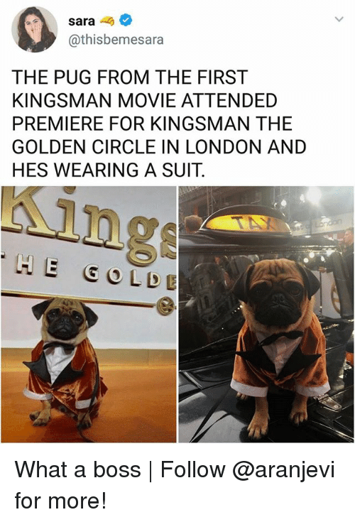 Memes, London, and Movie: sara-  @thisbemesara  THE PUG FROM THE FIRST  KINGSMAN MOVIE ATTENDED  PREMIERE FOR KINGSMAN THE  GOLDEN CIRCLE IN LONDON AND  HES WEARING A SUIT.  ing  HE GO LDE What a boss | Follow @aranjevi for more!