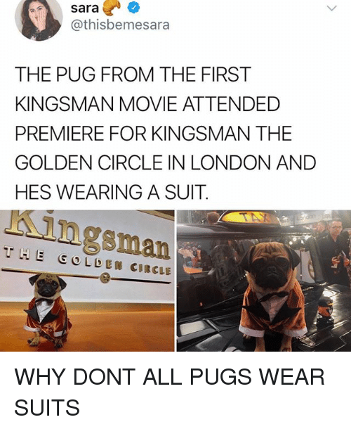 Memes, London, and Movie: sara?  @thisbemesara  THE PUG FROM THE FIRST  KINGSMAN MOVIE ATTENDED  PREMIERE FOR KINGSMAN THE  GOLDEN CIRCLE IN LONDON AND  HES WEARING A SUIT.  Kingsman  THE GOLDEN CIRCLE WHY DONT ALL PUGS WEAR SUITS