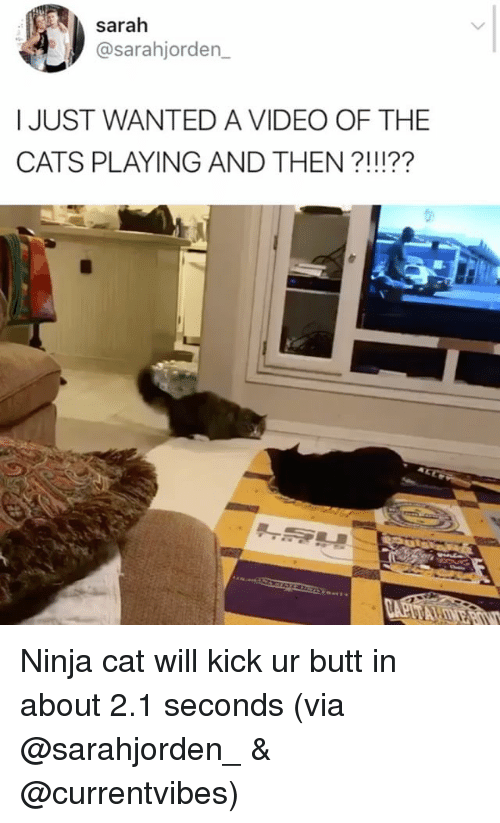 Butt, Cats, and Memes: sarah  asarahjorden  I JUST WANTED A VIDEO OF THE  CATS PLAYING AND THEN Ninja cat will kick ur butt in about 2.1 seconds (via @sarahjorden_ & @currentvibes)