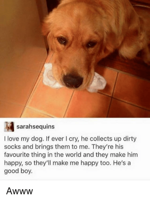 Funny, Love, and Dirty: sarahsequins  I love my dog. If ever cry, he collects up dirty  socks and brings them to me. They're his  favourite thing in the world and they make him  happy, so they'll make me happy too. He's a  good boy Awww