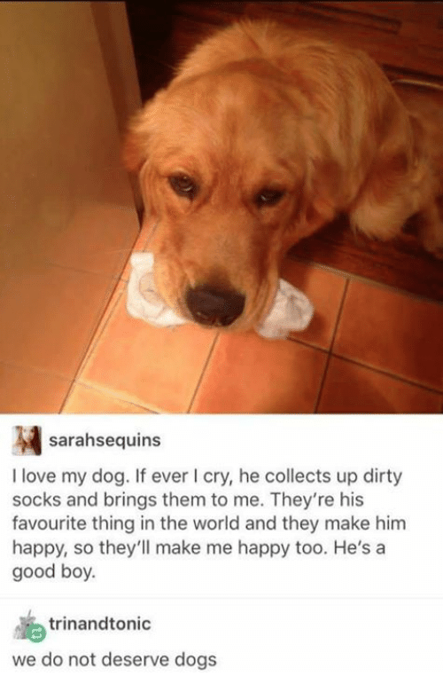 Dank, Dogs, and Love: sarahsequins  I love my dog. If ever I cry, he collects up dirty  socks and brings them to me. They're his  favourite thing in the world and they make him  happy, so they'll make me happy too. He's a  good boy  trinandtonic  we do not deserve dogs