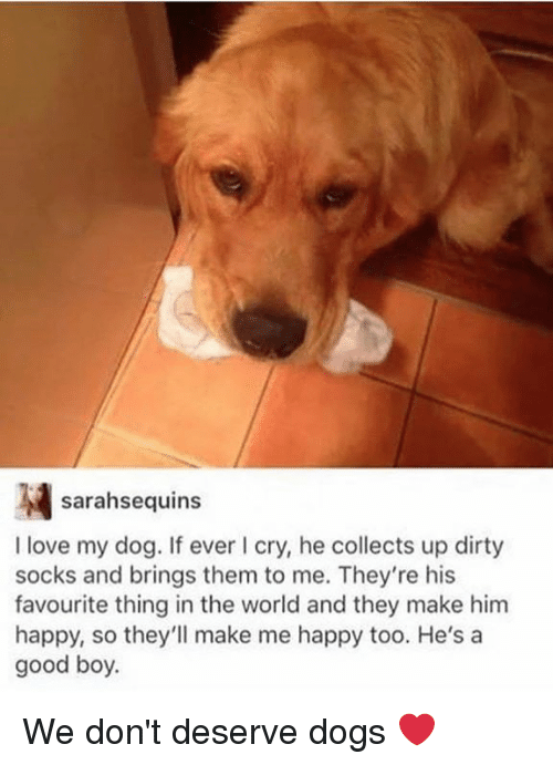 Dank, Dogs, and Love: sarahsequins  I love my dog. If ever I cry, he collects up dirty  socks and brings them to me. They're his  favourite thing in the world and they make him  happy, so they'll make me happy too. He's a  good boy. We don't deserve dogs ❤️