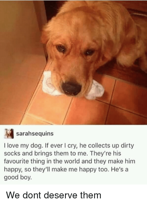 Love, Dirty, and Good: sarahsequins  I love my dog. If ever I cry, he collects up dirty  socks and brings them to me. They're his  favourite thing in the world and they make him  happy, so they'll make me happy too. He's a  good boy. We dont deserve them