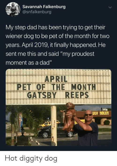 """Dad, Dank, and April: Savannah Falkenburg  @snfalkenburg  My step dad has been trying to get their  wiener dog to be pet of the month for two  years. April 2019, it finally happened. He  sent me this and said """"my proudest  moment as a dad""""  PET OF THE MONTH  GATSBY REEPS Hot diggity dog"""