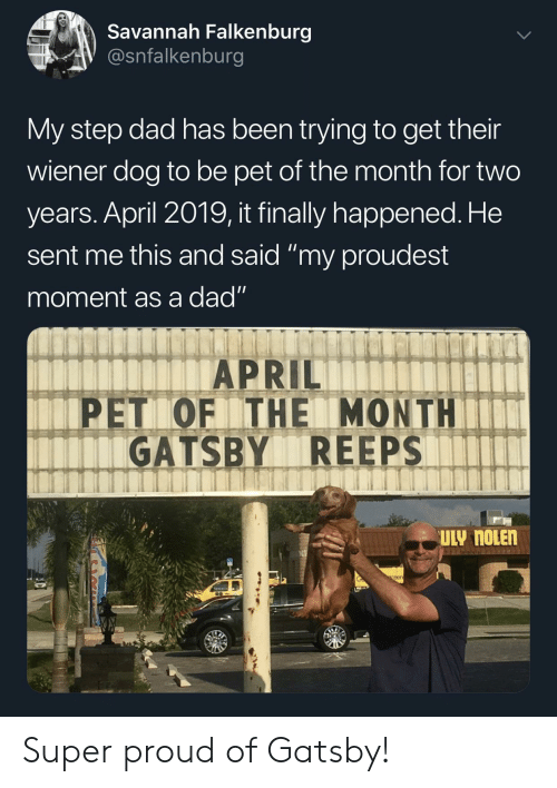 """Dad, Proud, and April: Savannah Falkenburg  V @snfalkenburg  My step dad has been trying to get their  wiener dog to be pet of the month for two  years. April 2019, it finally happened. He  sent me this and said """"my proudest  moment as a dad""""  APRIL  PET OF THE MONTHIT  GATSBY REEPS  eer Super proud of Gatsby!"""