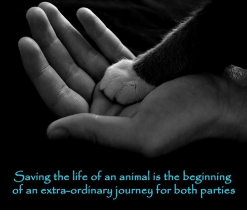 Journey, Life, and Memes: Saving the life of an animal is the beginning  of an extra-ordinary journey for both parties