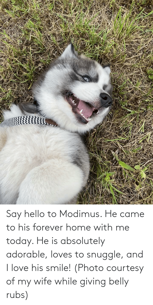 Hello, Love, and Forever: Say hello to Modimus. He came to his forever home with me today. He is absolutely adorable, loves to snuggle, and I love his smile! (Photo courtesy of my wife while giving belly rubs)