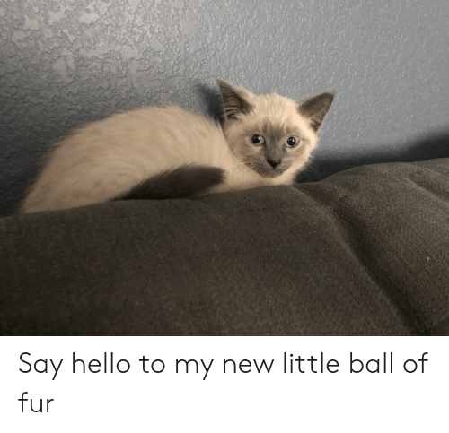 Hello, Fur, and New: Say hello to my new little ball of fur