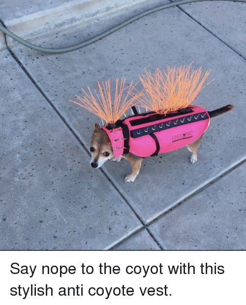 Coyote, Nope, and Stylish