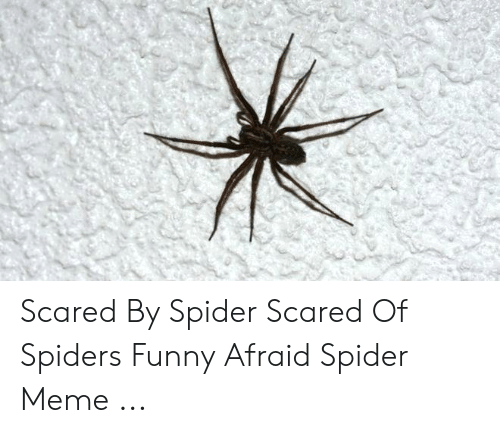 Scared By Spider Scared Of Spiders Funny Afraid Spider Meme