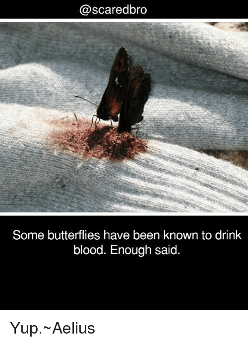 Drinking, Memes, and Been: @scaredbro  Some butterflies have been known to drink  blood. Enough said. Yup.~Aelius