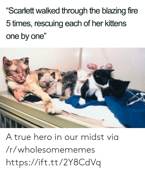"Fire, True, and Kittens: ""Scarlett walked through the blazing fire  5 times, rescuing each of her kittens  one by one"" A true hero in our midst via /r/wholesomememes https://ift.tt/2Y8CdVq"