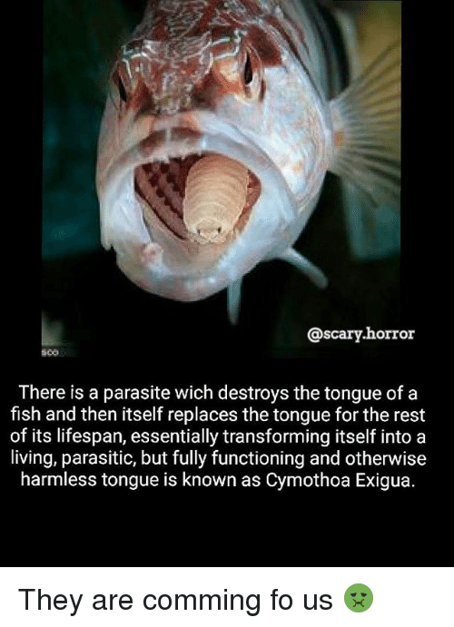 Memes, Fish, and Living: @scary.horror  There is a parasite wich destroys the tongue of a  fish and then itself replaces the tongue for the rest  of its lifespan, essentially transforming itself into a  living, parasitic, but fully functioning and otherwise  harmless tongue is known as Cymothoa Exigua They are comming fo us 🤢