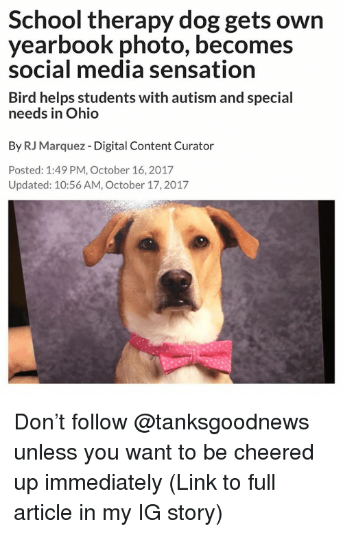 Funny, School, and Social Media: School therapy dog gets own  yearbook photo, becomes  social media sensation  Bird helps students with autism and special  needs in Ohio  By RJ Marquez - Digital Content Curator  Posted: 1:49 PM, October 16,2017  Updated: 10:56 AM, October 17,2017 Don't follow @tanksgoodnews unless you want to be cheered up immediately (Link to full article in my IG story)