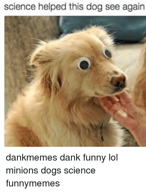 science helped this dog see again dankmemes dank funny lol 10385113 ✅ 25 best memes about minions dog minions dog memes