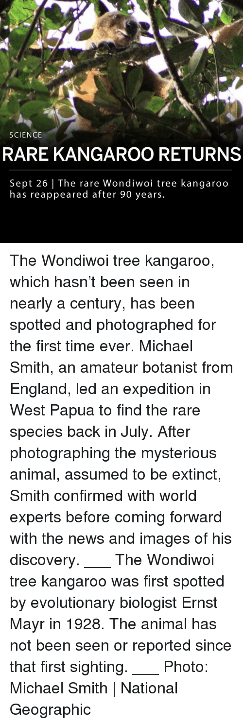 England, Memes, and News: SCIENCE  RARE KANGAROO RETURNS  Sept 26 | The rare Wondiwoi tree kangaroo  has reappeared after 90 years. The Wondiwoi tree kangaroo, which hasn't been seen in nearly a century, has been spotted and photographed for the first time ever. Michael Smith, an amateur botanist from England, led an expedition in West Papua to find the rare species back in July. After photographing the mysterious animal, assumed to be extinct, Smith confirmed with world experts before coming forward with the news and images of his discovery. ___ The Wondiwoi tree kangaroo was first spotted by evolutionary biologist Ernst Mayr in 1928. The animal has not been seen or reported since that first sighting. ___ Photo: Michael Smith | National Geographic