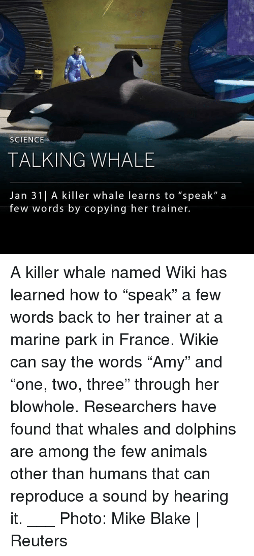 """Animals, Memes, and Dolphins: SCIENCE  TALKING WHALE  Jan 31